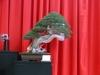 Gagnant du Noelanders Trophy 2012 : Juniperus de Luis Vallejo