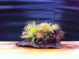 kusamono pour exposition bonsai