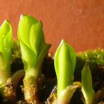 Kusamono de printemps