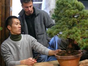 Shiino Kentaro en atelier avec un bonsaika