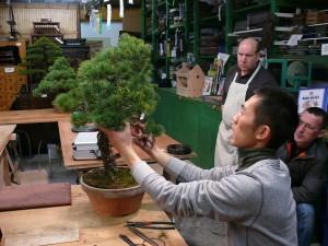 Atelier bonsai chez Guy Maillot avec Shiino Kentaro