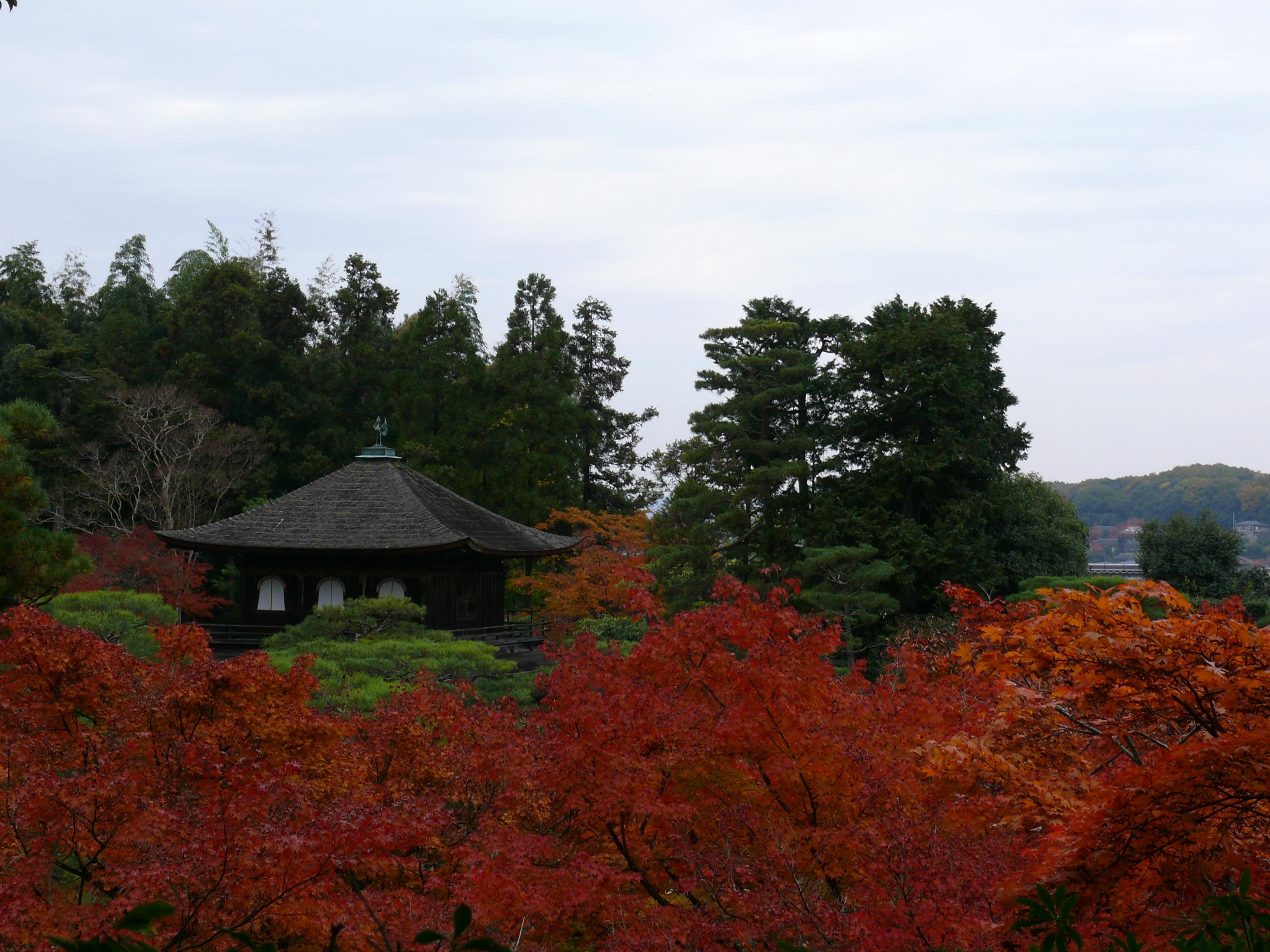 Instant japon jardins japonais les contrastes de couleurs - Arbre pour jardin japonais ...