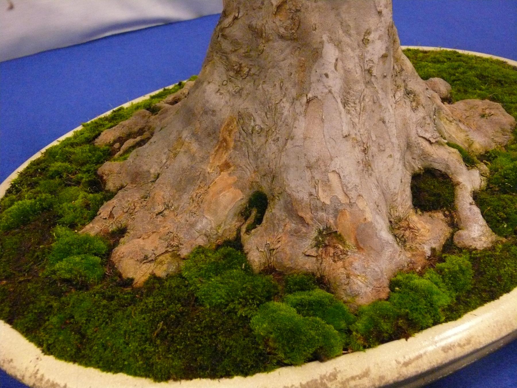 Plante pour mini jardin japonais id es - Plante pour jardin japonais ...