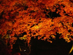 érables japonais de nuit dans le temple de Kiyomizu-dera