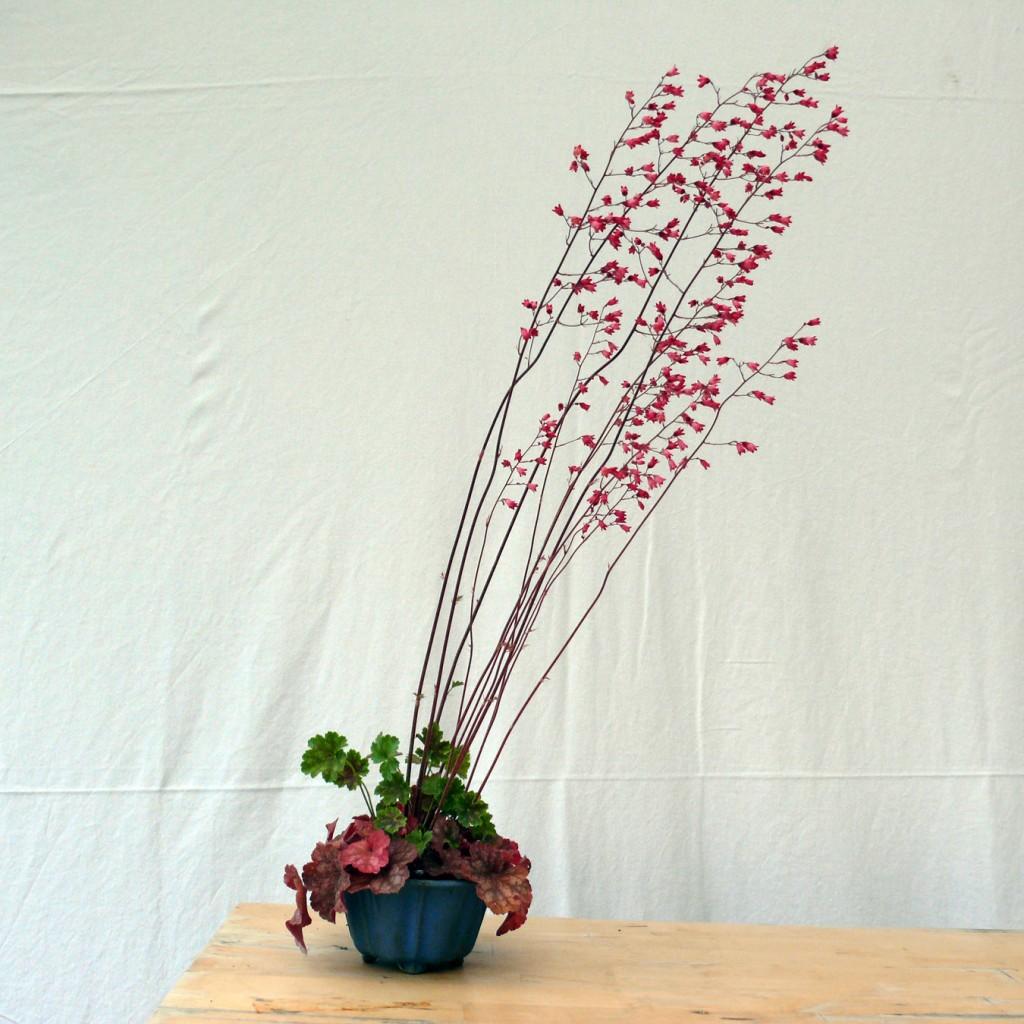 heuchere en fleur vers la droite