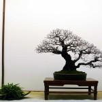 Bonsai-San Show de Saulieu 2014