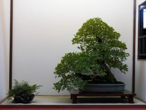 tokonoma Saulieu 2014