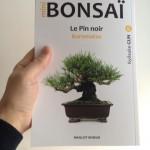 Kyosuke Gun sur les kuromatsu en mini-bonsai est arrivé à la maison