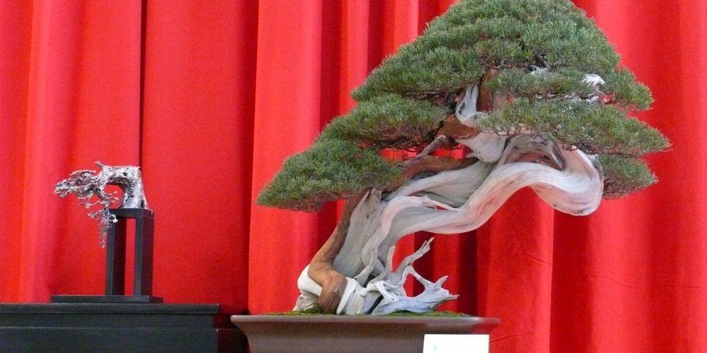 Noelanders Trophy 2012 and the winner is... - petit-arbre