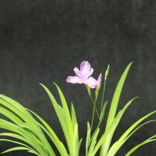 Floraison du printemps 2015