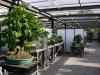 crespi-bonsai-cup-12