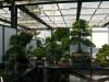 crespi-bonsai-cup-15
