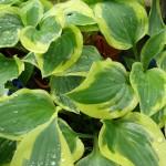 Instant nature : kusamono d'erodium