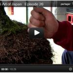 Instant nature : floraison des hosta