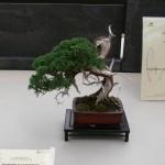 Exposition bonsai en Italie, la Crespi Bonsai Cup 2012