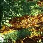 La carte bleue, outil indispensable à la pratique du bonsaï