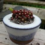 Les amateurs de bonsai aiment se faire une petite mousse