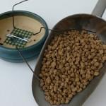 Rempotages : préparer les pots pour attacher le bonsai à son pot