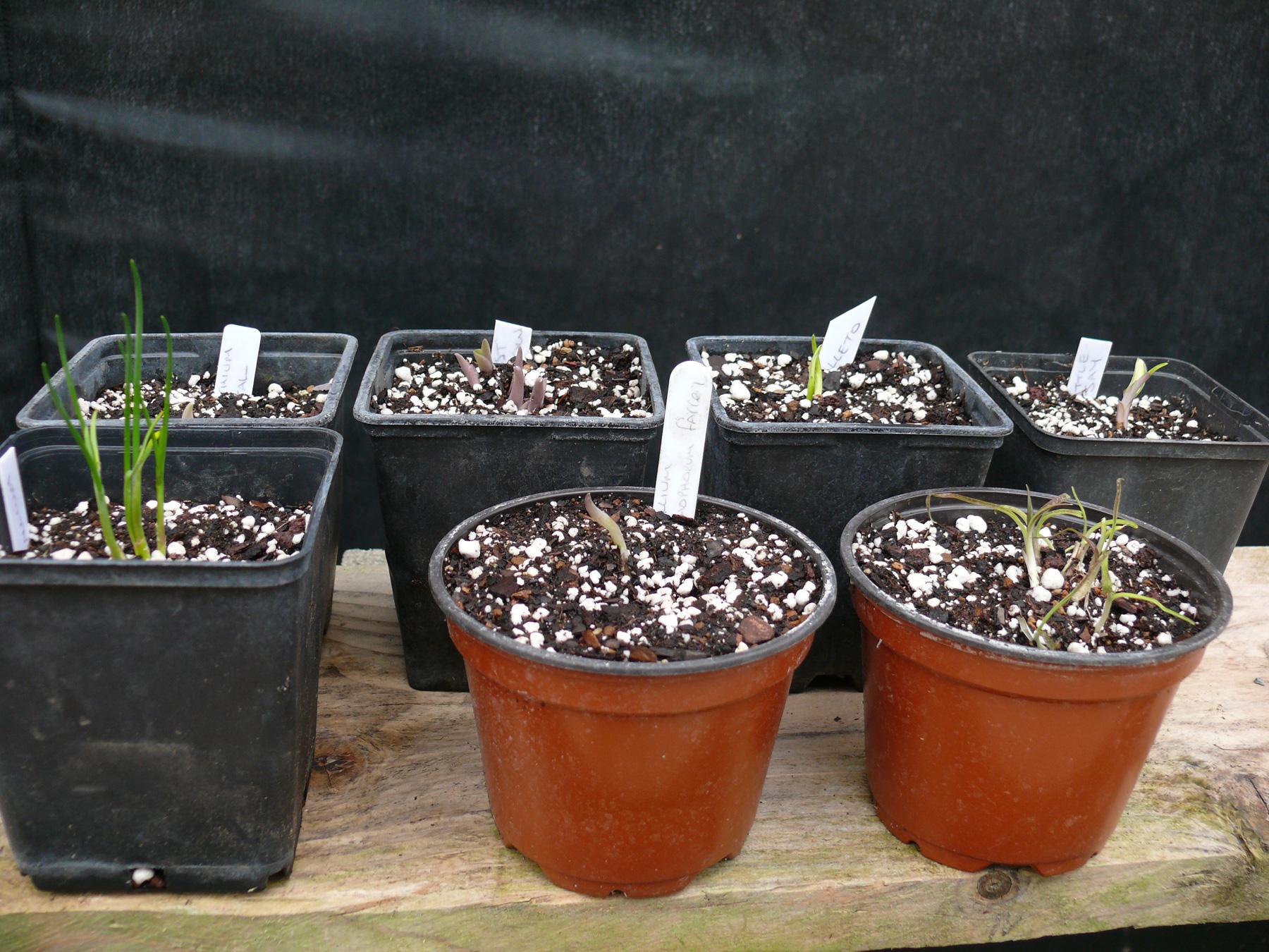 new plants arrived for kusamono