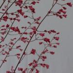 Fleurs d'Heuchère