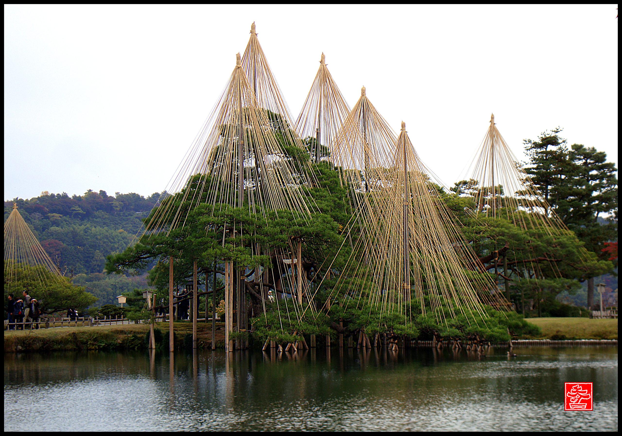yukitsuri, protection d'hiver au kenrokuen garden